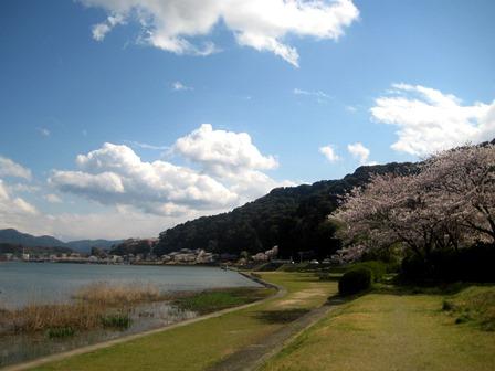 20140406-6_sakura_setagawa.JPG
