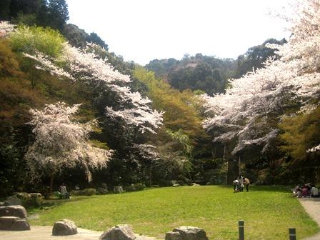 20140409-3_sakura_nagarakouen.JPG